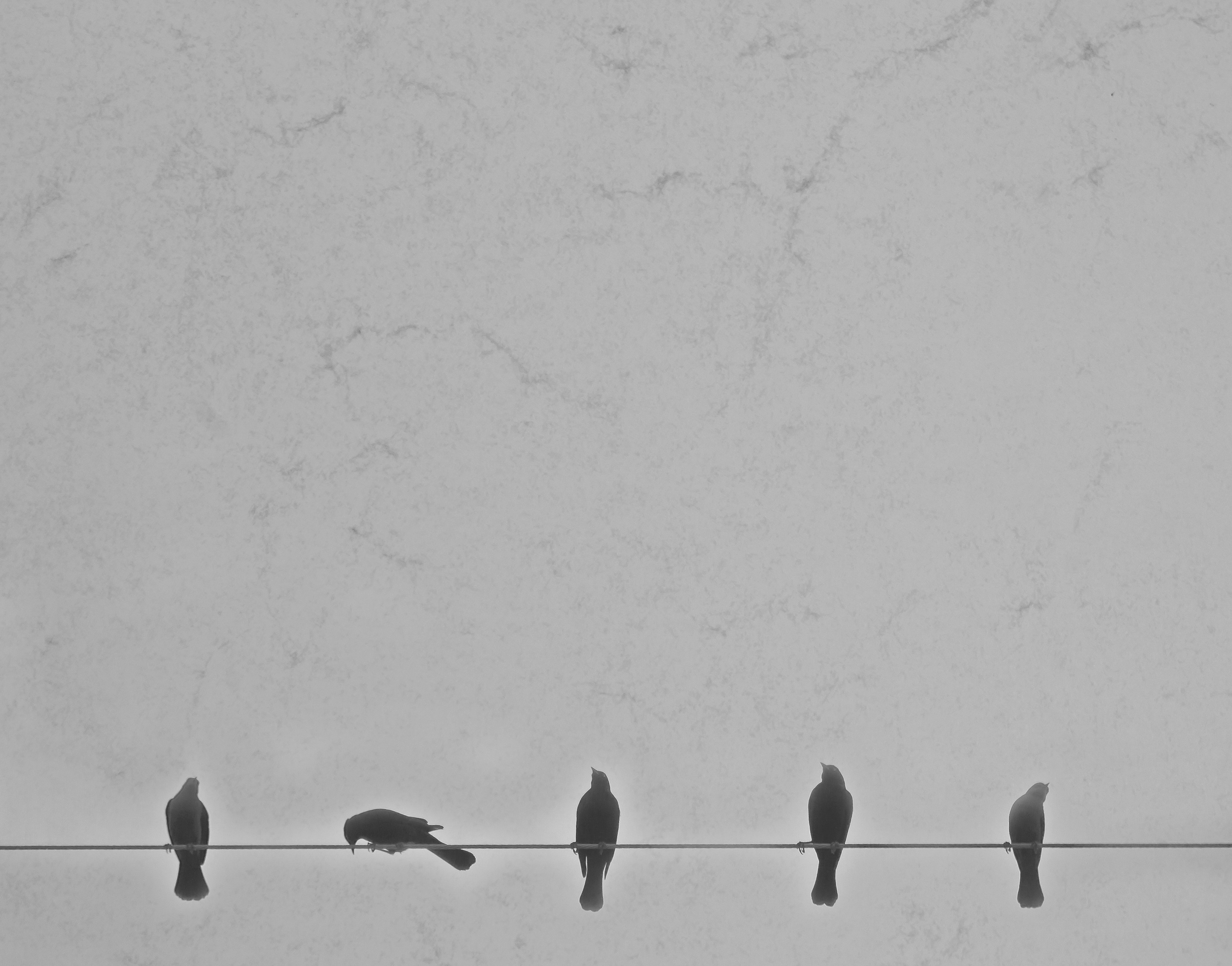 birds-on-wire-1113tm-pic-1017