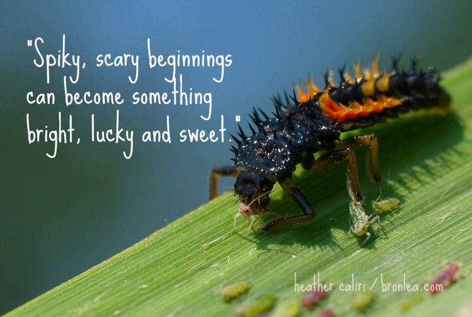 Encouragement for moms: spiky, scary beginnings truly can become something bright, lucky and sweet.